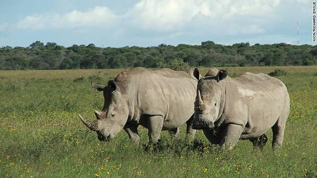 111110021957-rhino-extinct-northern-white-horizontal-gallery