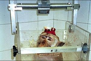 primatenversuche